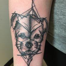 Teemu sketchy puppy